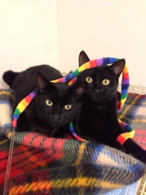 大切な地域猫お母ちゃんが生んでくれた、メグとジャック
