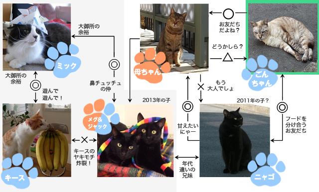 今村家に関わる猫たち
